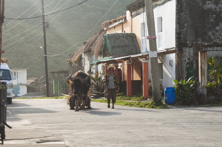 Batanes local